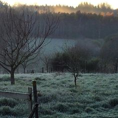 It's a cold & frosty morning  here in the Creuse, and as the sun rises behind the trees rich autumnal colours glow from the tree tops.  #sunrise #frost #frosty #frostymorning #witch #pagan #paienne #wicca #wiccan #witchesofinstagram #pagansofinstagram #wiccansofinstagram #eclecticwitch #solitarywitch #hedgewitch #waterwitch #greenwitch #magickal #magickalmornings