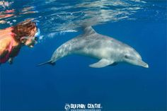 snorkeling-with-wild-dolphins