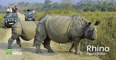 Spot the diverse wildlife in a world heritage site with Rhino Tours India.