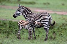 KENYA-1512_resultat