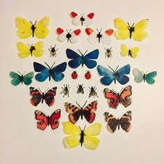 Insects and butterflies for the Garden of Eden