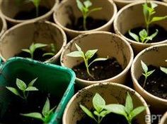 Sowing The Seeds of Spring | Acreage Life Magazine