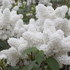 Here are eleven beautiful and fragrant plants that repel mosquitoes - keeping your home and garden mosquito free.