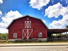 #wellington #barn #pbi #wpb #ontheroad #oldbarn #sunnyday #clouds #sky #bluesky #easterday #jesus #resusitation #happyeaster #loxahatchee #roadtrip