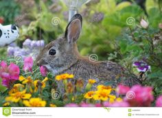 Image result for cottontail bunny flowers