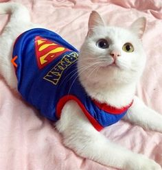 Cat Superman Vest – Accessories & Products for Cats