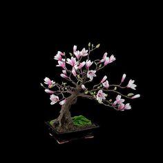 #bonsai #minibahçe #bonsailife #bonsailove #bonsaitree #bonsaiworld #bonsaicare #botanyturkey @botanyturkey