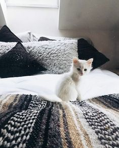 Fantastic pretty cats tips are offered on our site. Take a look and you wont be sorry you did. I Love Cats, Crazy Cats, Cute Cats, Funny Cats, Animals And Pets, Baby Animals, Cute Animals, Kittens Cutest, Cats And Kittens