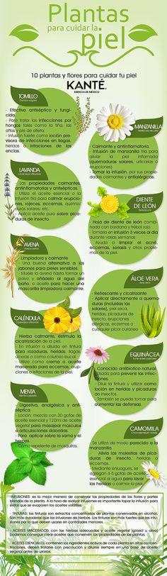 Estas son algunas plantas que te servirán para cuidar tu piel y tu salud.