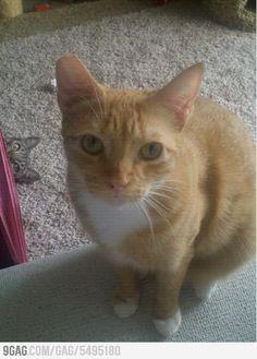 Kitten Photobomb