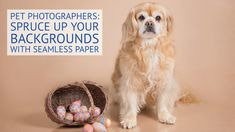 Seamless Paper is hands-down the most cost-effective solution for creating smooth and even photography backgrounds. Pet Photographer, Background For Photography, Animal Photography, Pets, Paper, Animals, Nature Photography, Animaux, Animales