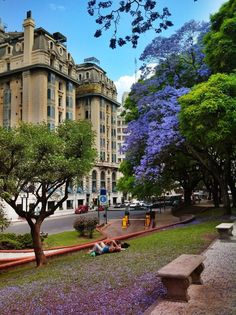 Buenos Aires, Argentina — by Nisah Cheatham. November 2012 The lovely jacaranda trees in a random park. When your favorite color is purple, Buenos Aires looks...