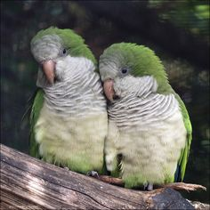Welcome to the zoo : The pictures - New pics 19 october 2019 - Page 13 Animals For Kids, Animals And Pets, Funny Animals, Cute Animals, Funny Birds, Cute Birds, Exotic Birds, Colorful Birds, Budgies