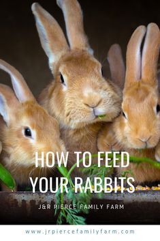 If you're thinking about raising rabbits, these helpful tips will teach you how to feed them. Raising Rabbits, Farm Projects, Urban Homesteading, Homestead Survival, Growing Vegetables, Livestock, Farm Life, Helpful Tips, Farming