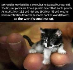 The World Smallest Cat….. What?!?!?!?!?!?! Gimme!!!!
