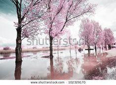 Park Of Pateira De Fermentelos Stock Photo 137423063 : Shutterstock