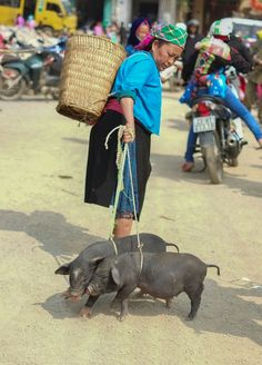 Photograph Piggies!! Come home! by Trinh Nguyen on 500px