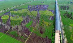 Em Shenyang, na China, um dos 13 murais criados pelo governo em plantações de arroz com o objetivo de criar atrações turísticas no local SHENG LI / REUTERS
