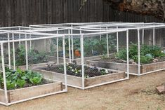pvc pipe + hardware cloth to make raised garden beds cat/bird proof - also cover with white plant fabric to extend growing season