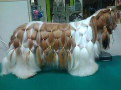 Segundo o site G1 Pet shops viram 'salões de luxo' e cães ganham tratamento vip em MG
