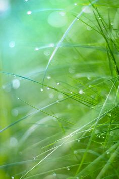 grass light Art Print by @dyrkwyst  - this is an awesome photo! Nice work.