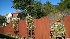 färgsättning,falurött,trädgård,staket Garden Gadgets, Walled Garden, Fence Design, Lawn And Garden, Garden Gate, Dream Garden, Garden Inspiration, Garden Landscaping, Pergola