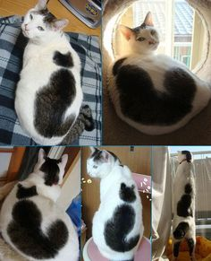 The Cat with a Cat on his back ^.^