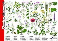Herkenningskaart / zoekkaart Planten Nature Hunt, All Nature, Flora, Color Meanings, Outdoor Learning, Crafts For Boys, Educational Toys For Kids, Edible Plants, My Secret Garden