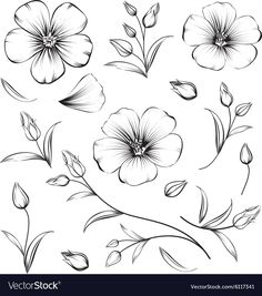 black and white flower drawing collection of flowers set cherry blossom bundle isolated over contours vector illustration drawings Small Flower Drawings, Flower Art Drawing, Flower Drawing Tutorials, Small Flower Tattoos, Flower Sketches, Floral Drawing, Drawing Sketches, Painting & Drawing, Black Flowers