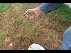 How to Fix a Patchy, Weedy Lawn - This Old House - YouTube