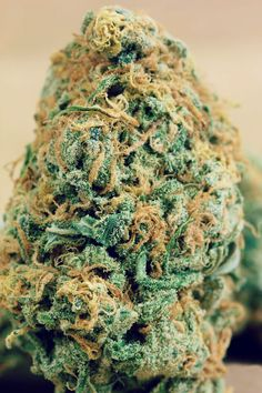 "nickijuana: "" BLUE DREAM! "" Gorgeous!!"