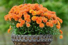 Según la NASA estas plantas serán tus mejores aliadas para purificar el aire de tu casa ............................... #Plantas #Salud #VidaSaludable.