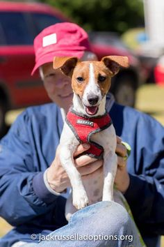 Sophie, Adoptable Jack Russell | Georgia Jack Russell Rescue, Adoption & Sanctuary