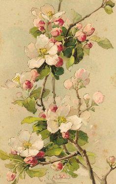 Vintage Cherry Blossoms Postcard ~ Catherine Klein