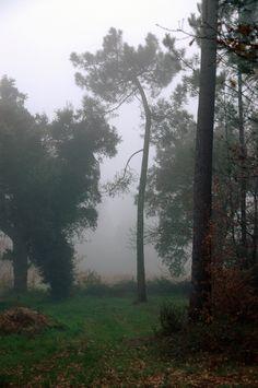 #Bruma na floresta A floresta é um local mítico, sempre que nos deixamos envolver pela sua beleza. Espaço de inspiração para muitos contos, ...