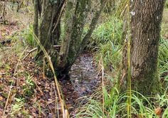 'I sit beside a little shadowy stream' #nature - http://anenglishwood.com/?p=8750