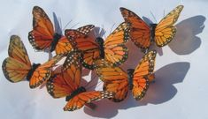 Orange Butterfly, Butterfly Hair, Monarch Butterfly, Handmade Gifts For Her, Orange Aesthetic, Butterfly Wallpaper, Black Feathers, Peacock Feathers, How To Make Hair