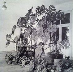 Henri Matisse's studio, Hotel Regina, Nice, 1948.