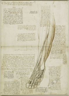 'Los músculos y los tendones de la pierna y el pie'. #Leonardo #DaVinci | c.1510-11 Royal Collection Trust / (C) Her Majesty Queen Elizabeth II 2013. / THE ROYAL COLLECTION