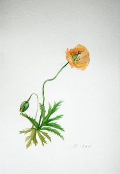 Flower Painting Orange Poppy watercolor by VerbruggeWatercolor, $19.00