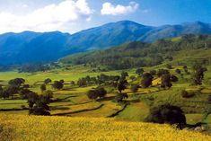 Araku valley, Andhra Pradesh, #ArakuValley