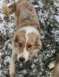 LOST DOG: 03/03/2017 - Warsaw, Indiana, IN, United States. Ref#: L34113 - #CritterAlert #LostPet #LostDog #MissingDog