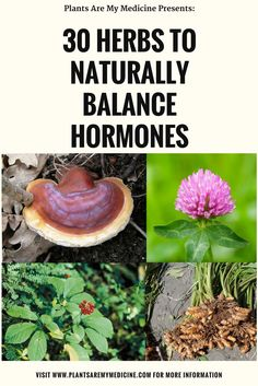 30 Herbs to Naturally Balance Hormones for both Men and Women