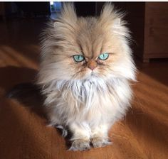 Say hello to Mr. Fluffy Cat