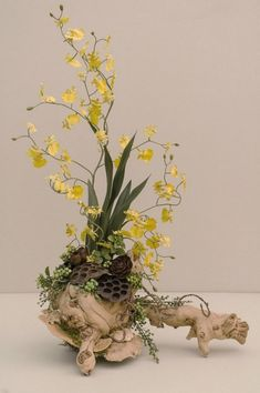 Houseplants That Filter the Air We Breathe Forest Inspired Oncidium Orchid By Hoffmansforestgarden On Etsy, Driftwood Planters, Driftwood Art, Orchids Garden, Orchid Plants, Deco Floral, Arte Floral, Arreglos Ikebana, Orquideas Cymbidium, Growing Orchids