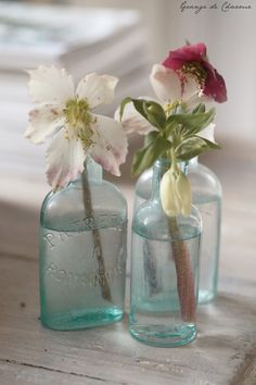 Hellebores in old blue glass bottles