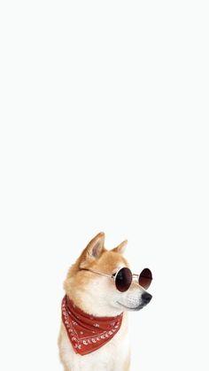 Source by dog dog memes dog videos videos wallpaper dog memes dog quotes dogs dogs pictures dogs videos puppies puppy video Cute Dog Wallpaper, Tier Wallpaper, Funny Phone Wallpaper, Funny Wallpapers, Animal Wallpaper, Cute Funny Animals, Cute Baby Animals, Cute Cats, Cute Dogs And Puppies
