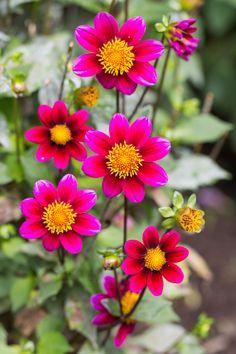 https://flic.kr/p/p4mYTE | Flower