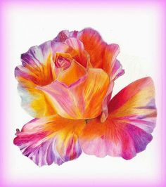 Prismacolor drawing.  Rose Beast. #prismacolor.  #Rose #drawing art.  #Multicolor rose.