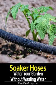 Soaker Hoses offer a